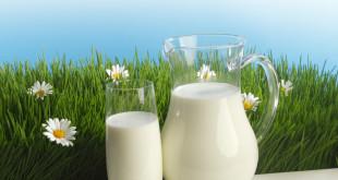 Jesu li light mliječni proizvodi zdraviji?