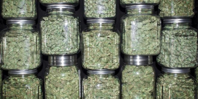 Britanska vlada marihuani priznala medicinski učinak